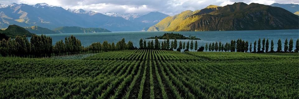 De 7 wijnregio's van Nieuw-Zeeland
