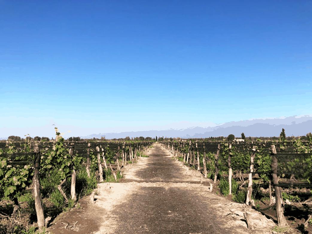 Gastblog: Op wijnreis naar Mendoza (deel 1)
