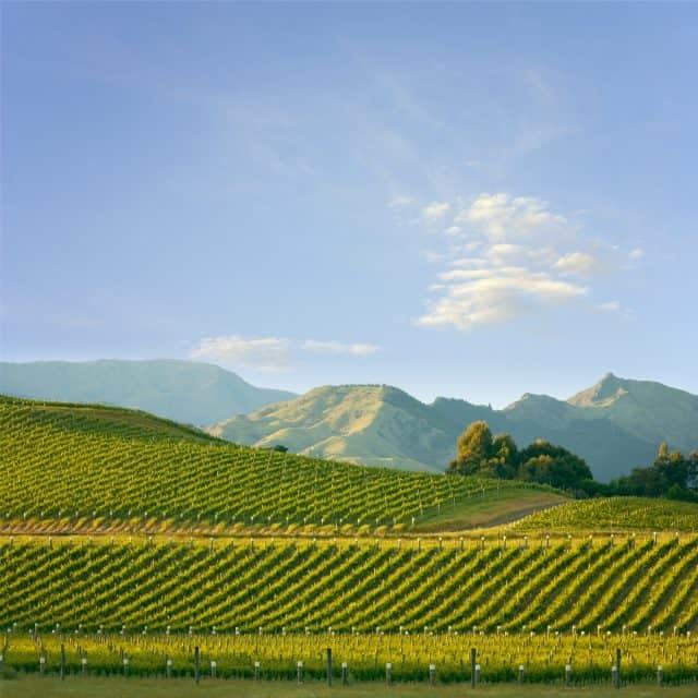 8x Wa-wai-wat? De wijngebieden met een W van Nieuw-Zeeland