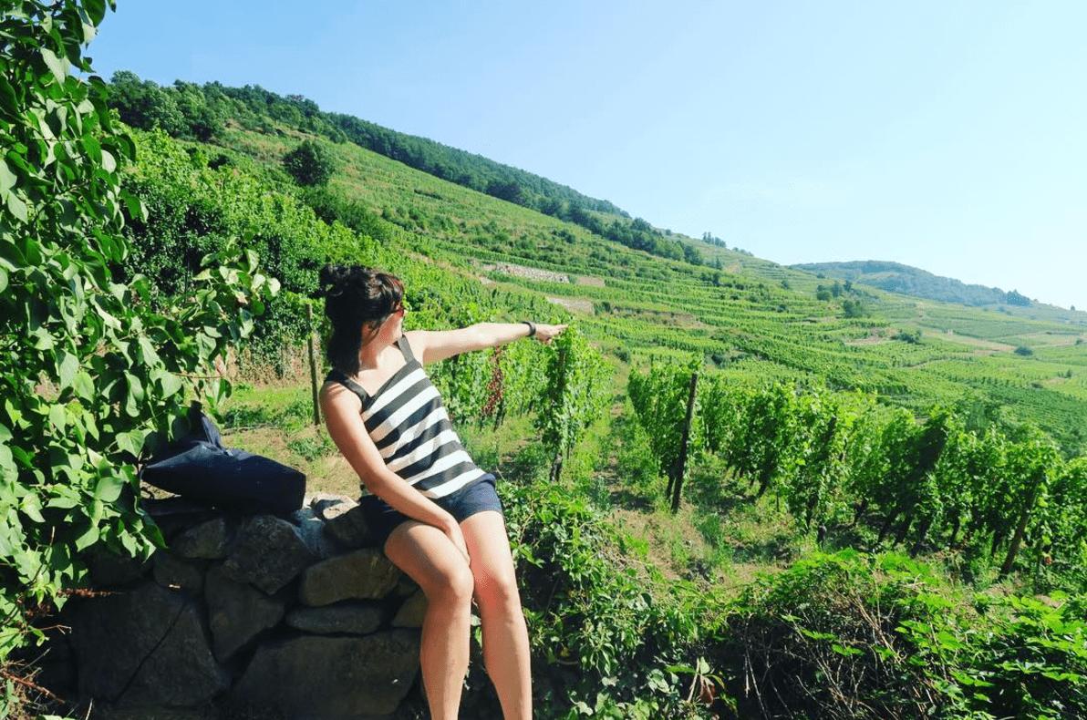 Biodynamische wijn – de hippies onder de wijnen