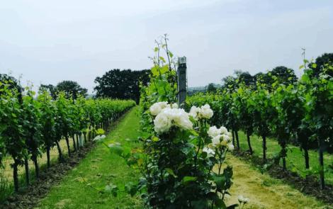 Engelse wijn