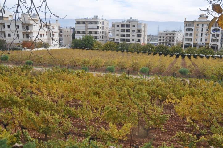 libanon wijnland